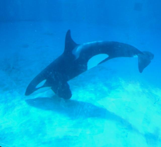 OrcaUnder13