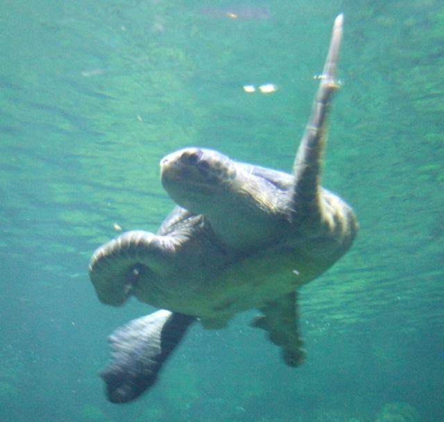 TurtleBoogie13