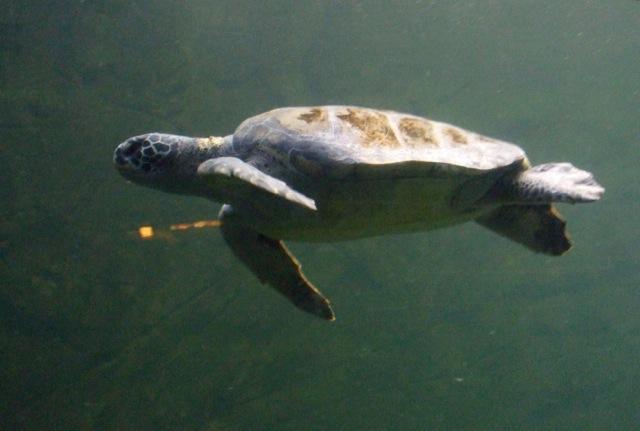 TurtleGraceful13